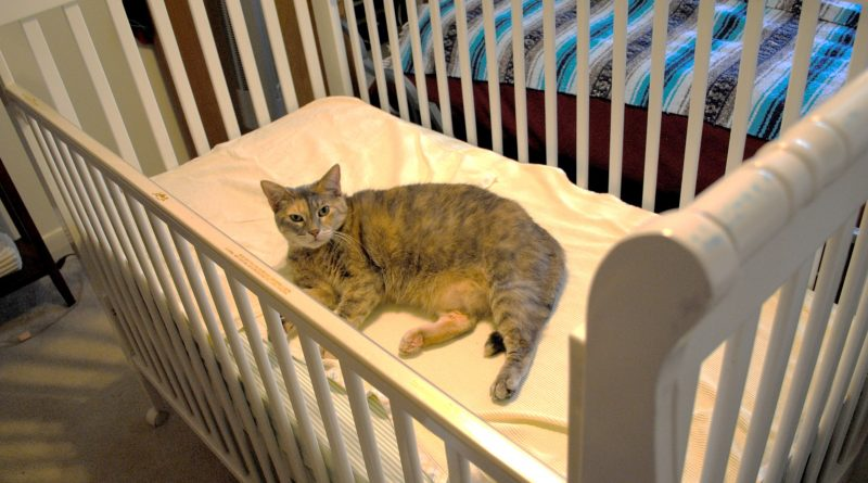 5 Easy Ways to Prepare Your Cat for the New Baby
