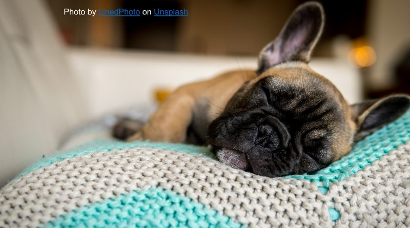 Here are five ways to prepare your dog to meet the new baby.
