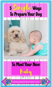 Is your family growing? Are you getting ready to introduce your dogs to your little bundle of joy? Here are five easy ways to prepare your dog to meet the new baby