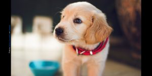 5 Scientific Reasons Humans Why Humans Love Puppies