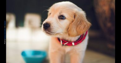 5 Scientific Reasons Humans are so Captivated by Puppies