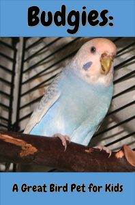 Budgies, or parakeets, are one of the best pet birds for kids because they are so sweet and personable!