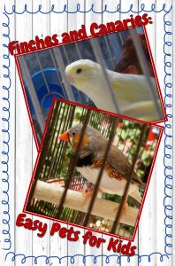 Because these birds are simple and easy to care for, finches and canaries make one of the best pet birds for kids