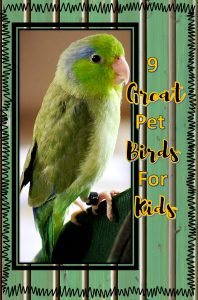 If your child is a bird lover, here are some of the best pet birds for kids. Enjoy!