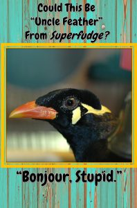 If you like Judy Blume's book, Superfudge, you may be in the market for a pet myna bird. Remember to watch what you say around a smart myna if you don't want them to embarrass you!